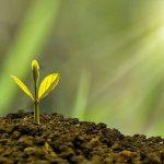 Tree Maintenance: Ways to Keep Trees Alive & Healthy